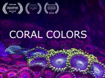 Coral colors